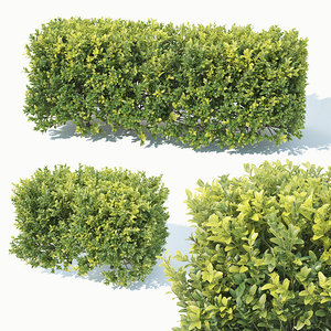 3D model 50cm hedge