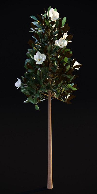3D flowering magnolia grandiflora