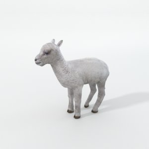 little sheep 3D