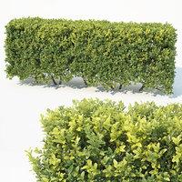 6 hedge 3D