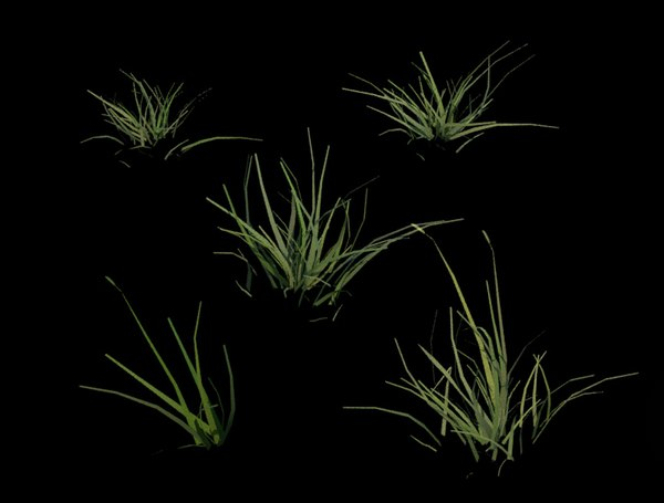 3D model 5 grass clumps