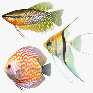 freshwater fish 3D