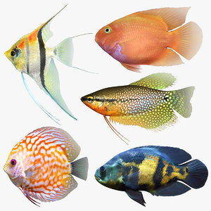 freshwater fish 2 model
