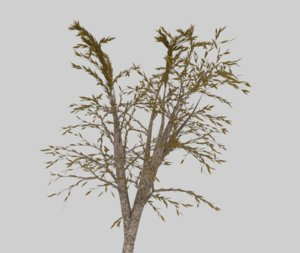 photorealistic weeping willow tree 3D
