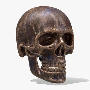 realistic human skull model