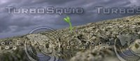 3D seedling germination animation