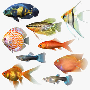 freshwater fish 3 3D model