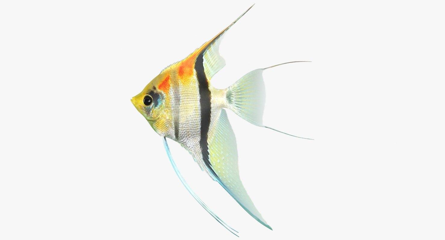3D freshwater fish 4