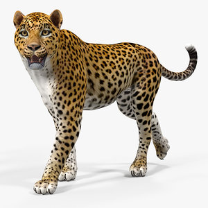 3D leopard rigged animate