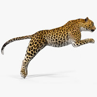 leopard rigged animate 3D model