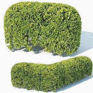 50cm hedge 3D