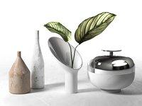 calathea ornata sanderiana vases 3D model