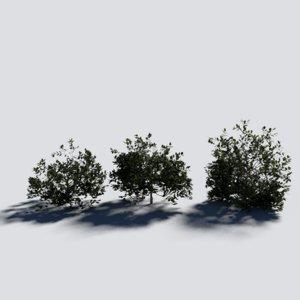 shrub blender cycles 3D model