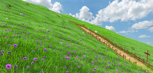 3D grass sky model