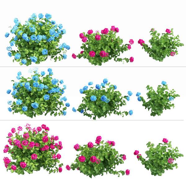 plants hydrangea set 03 3D model