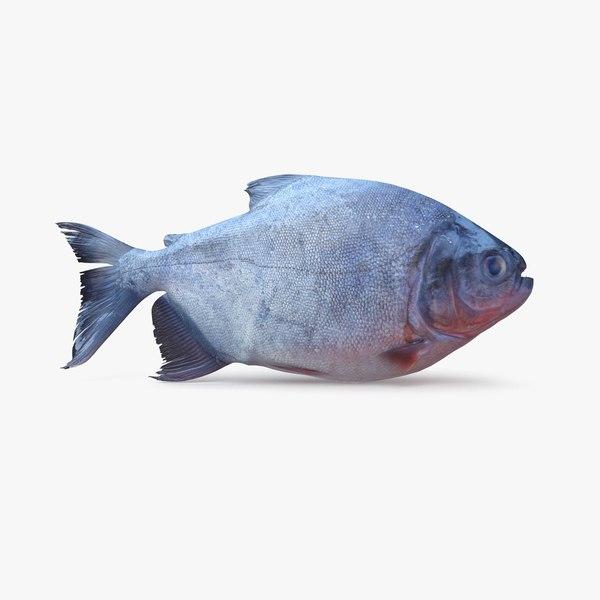 red piranha model