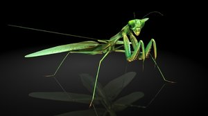 mantis insects model
