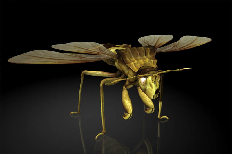 3D leptopodid pentatomidae stinkbug model