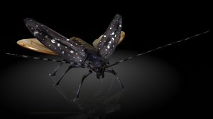 3D cerambycidae insects