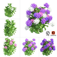 plants hydrangea set 02 3D model