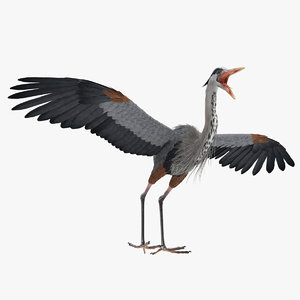 great blue heron rigged 3D
