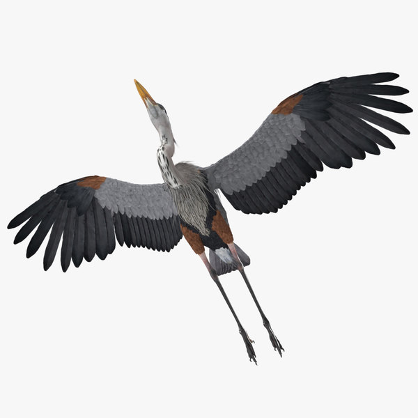 great blue heron rigged 3D model