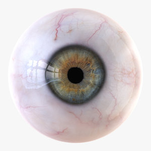 3D iris anatomy eye pupil model