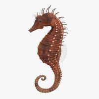 3D model seahorse