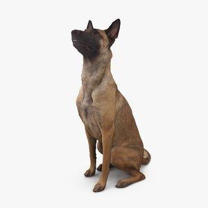 3D dog malinois