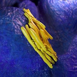 3D mycobacterium tuberculosis model