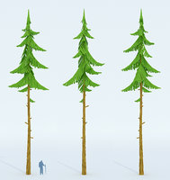 cartoon forest spruce model