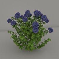 arbusto 3D model