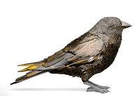 bird sparrow greenfinch 3D