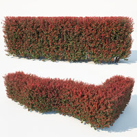 3D hedge berberis thunbergii model