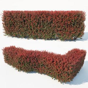 3D hedge berberis thunbergii model