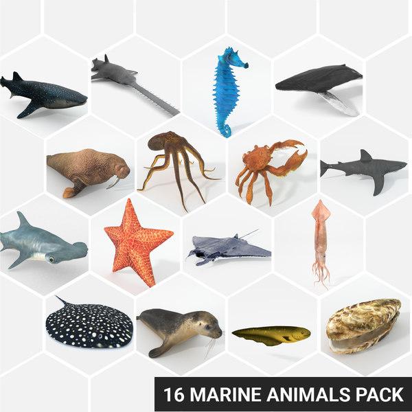 3D 16 marine animals model