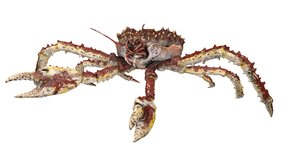 3D king crab rigged