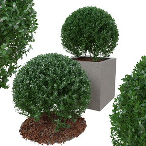 buxus bush ball 3D