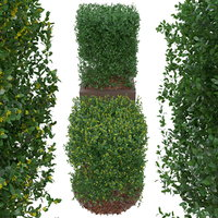 3D boxtree buxus bush form