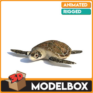 3D caretta turtle