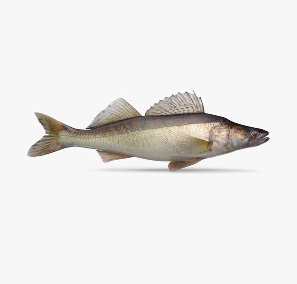 walleye pbr 3D model