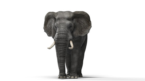 elephant africa 3D model