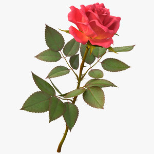 rose light red 3D model