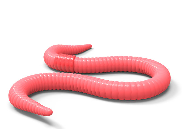 worm red model