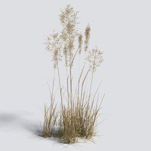 dry bent grass 3D model