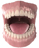 3D anatomy dental