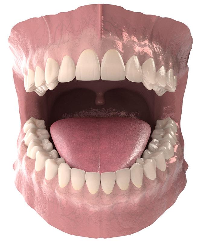 3D anatomy dental - TurboSquid 1326310
