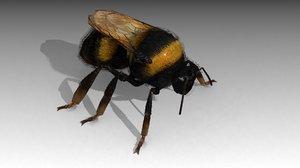 bee bumble 3D model