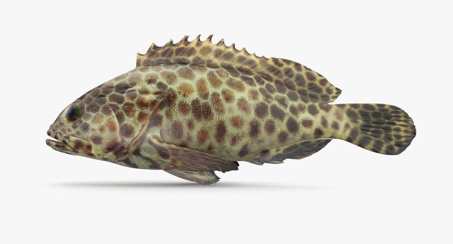 3D grouper pbr