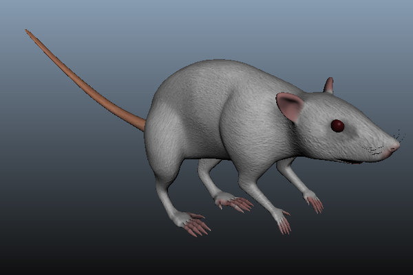 mouse rigg image model
